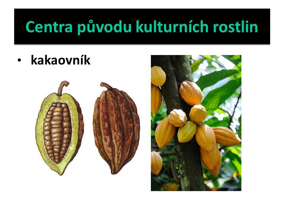 Centra původu kulturních rostlin kakaovník