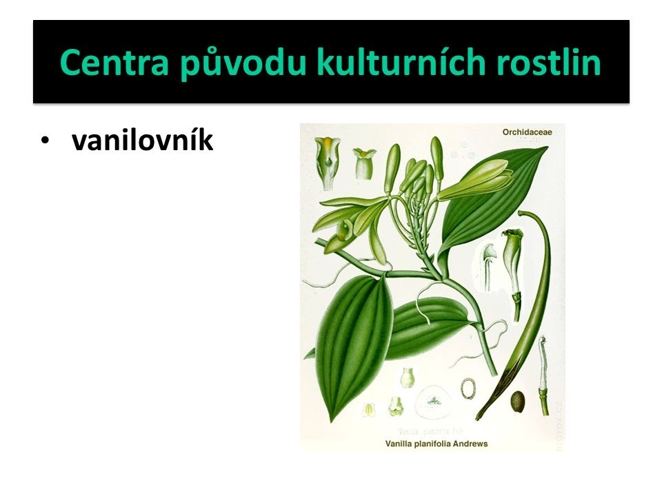 Centra původu kulturních rostlin vanilovník
