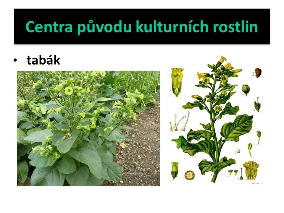 Centra původu kulturních rostlin tabák