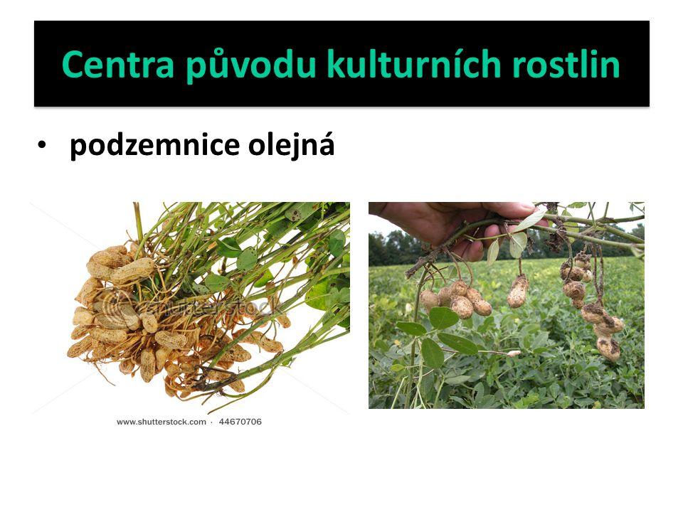 Centra původu kulturních rostlin podzemnice olejná
