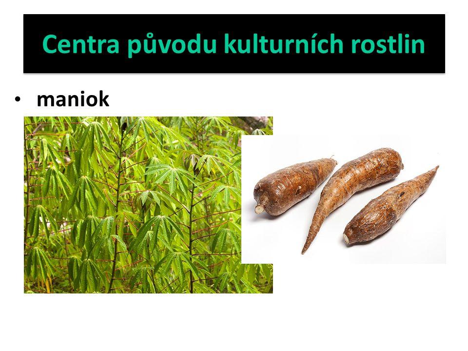Centra původu kulturních rostlin maniok