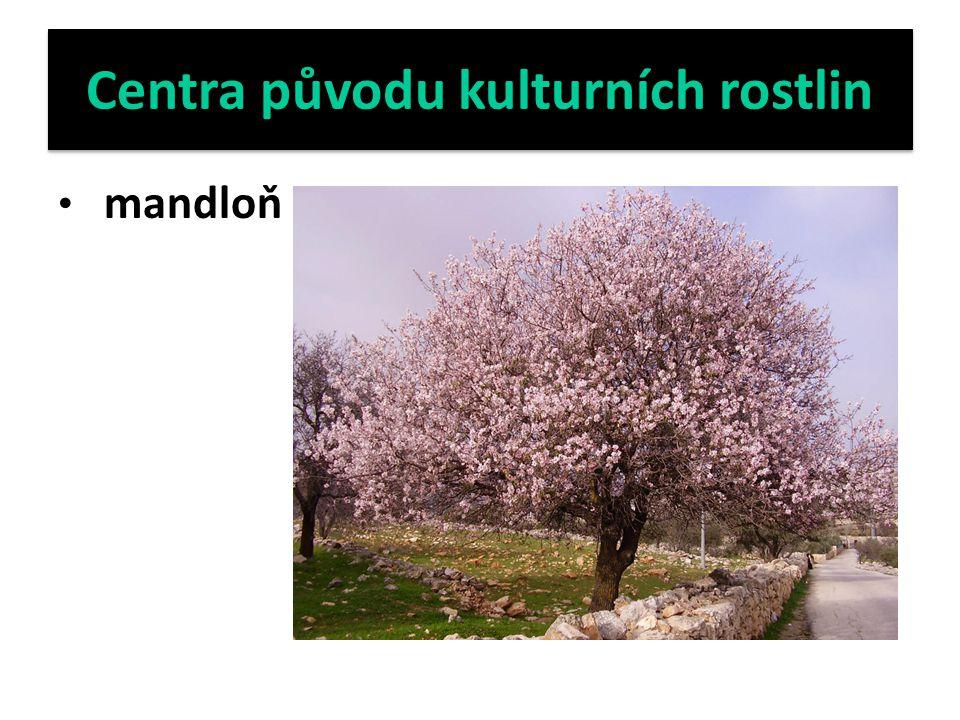 Centra původu kulturních rostlin mandloň