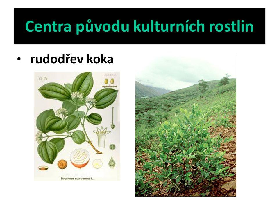 Centra původu kulturních rostlin rudodřev koka