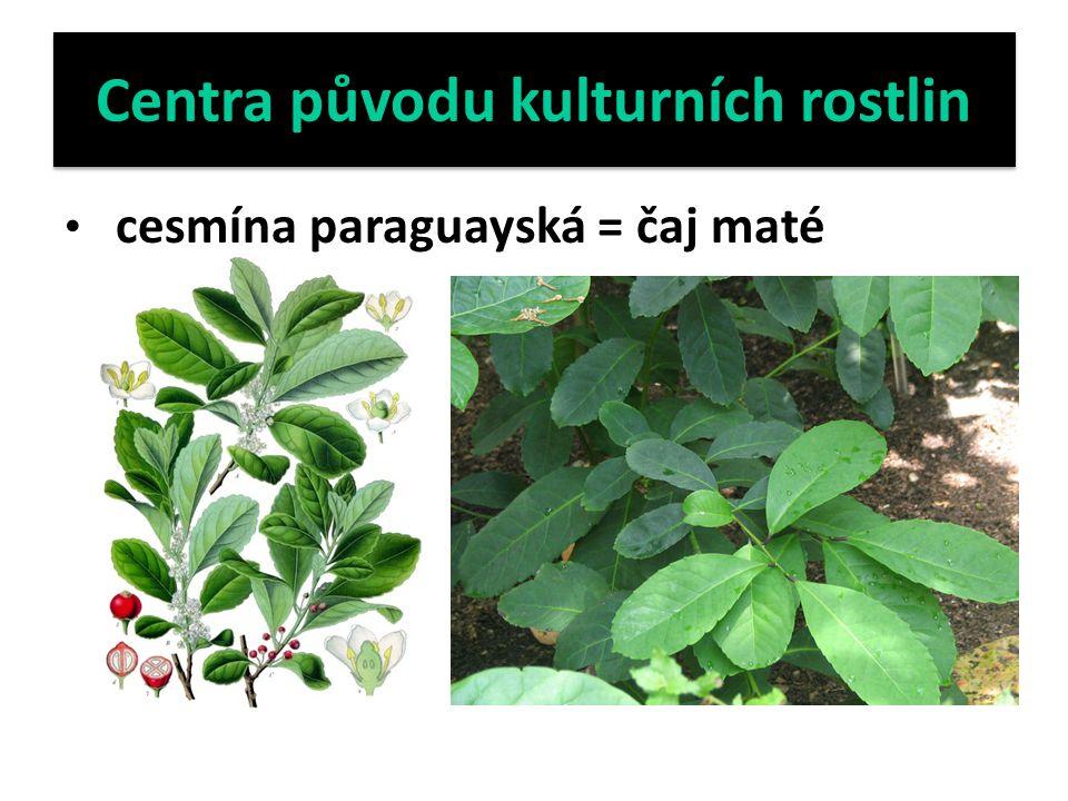 Centra původu kulturních rostlin cesmína paraguayská = čaj maté