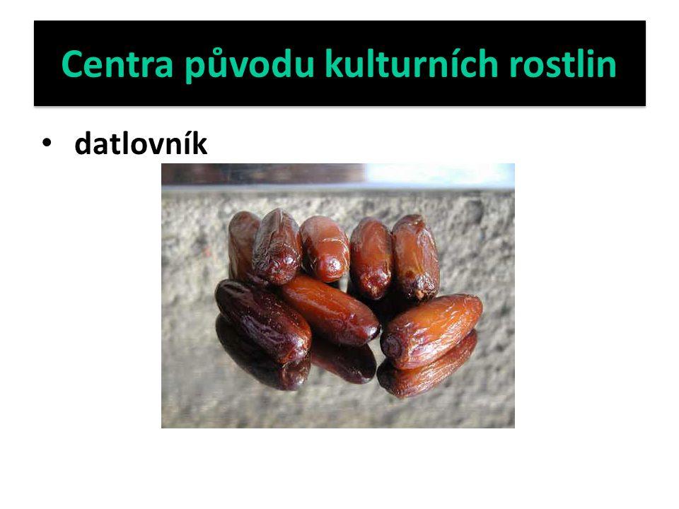 Centra původu kulturních rostlin 2.