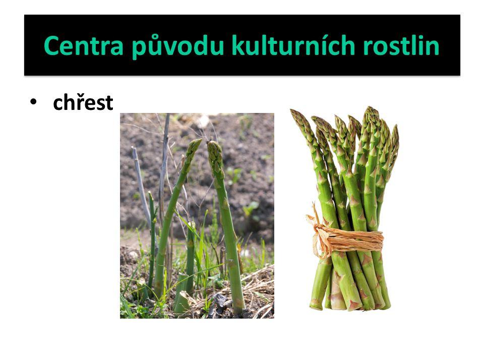 Centra původu kulturních rostlin chinovník