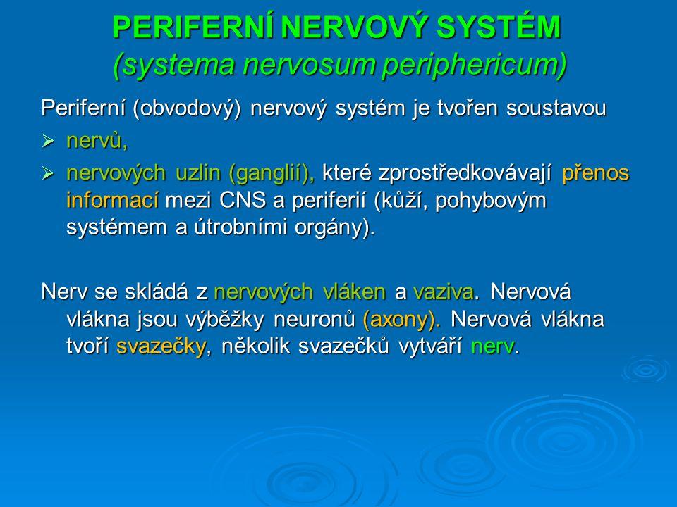PERIFERNÍ NERVOVÝ SYSTÉM (systema nervosum periphericum) Periferní (obvodový) nervový systém je tvořen soustavou  nervů,  nervových uzlin (ganglií), které zprostředkovávají přenos informací mezi CNS a periferií (kůží, pohybovým systémem a útrobními orgány).
