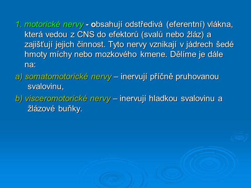 1. motorické nervy - obsahují odstředivá (eferentní) vlákna, která vedou z CNS do efektorů (svalů nebo žláz) a zajišťují jejich činnost. Tyto nervy vz
