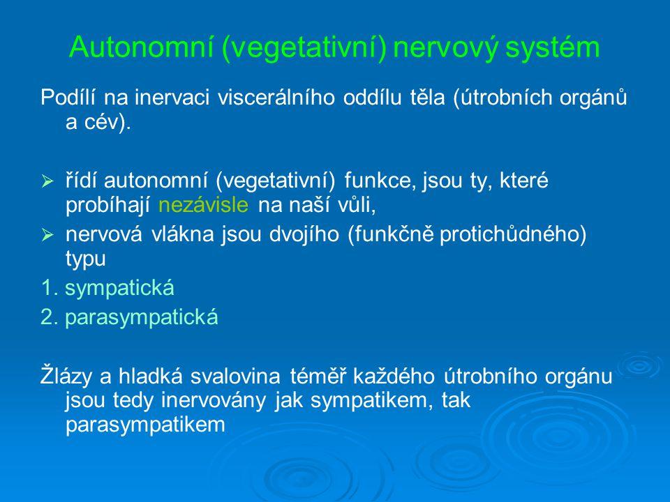 Autonomní (vegetativní) nervový systém Podílí na inervaci viscerálního oddílu těla (útrobních orgánů a cév).
