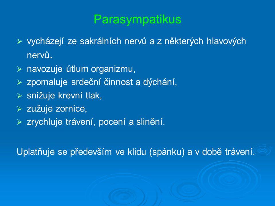 Parasympatikus   vycházejí ze sakrálních nervů a z některých hlavových nervů.