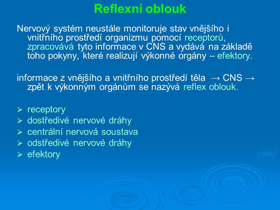 Reflexní oblouk Nervový systém neustále monitoruje stav vnějšího i vnitřního prostředí organizmu pomocí receptorů, zpracovává tyto informace v CNS a vydává na základě toho pokyny, které realizují výkonné orgány – efektory.