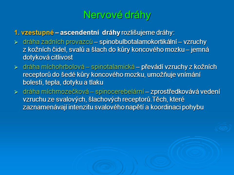 Nervové dráhy 1.