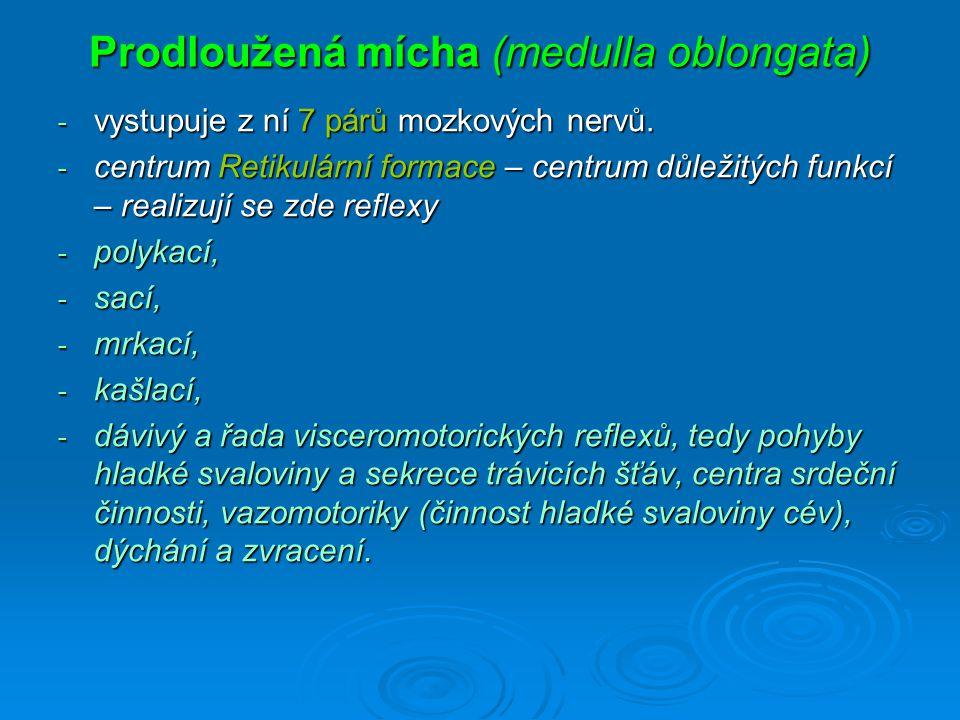Prodloužená mícha (medulla oblongata) - vystupuje z ní 7 párů mozkových nervů.