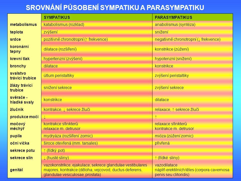 SYMPATIKUS PARASYMPATIKUS metabolismuskatabolismus (rozklad)anabolismus (syntéza) teplotazvýšenísnížení srdcepozitivně chronotropní (↑ frekvence)negat