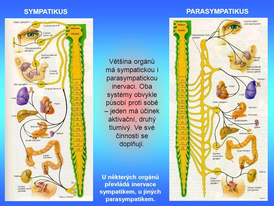 Většina orgánů má sympatickou i parasympatickou inervaci. Oba systémy obvykle působí proti sobě – jeden má účinek aktivační, druhý tlumivý. Ve své čin