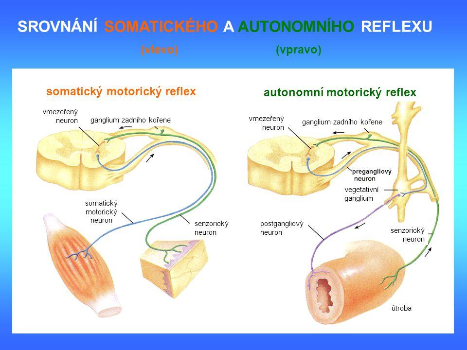 somatický motorický reflex autonomní motorický reflex vmezeřený neuron ganglium zadního kořene vmezeřený neuron ganglium zadního kořene somatický moto