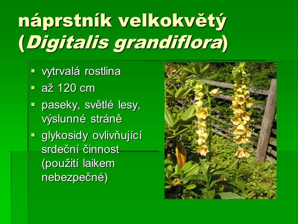 náprstník velkokvětý (Digitalis grandiflora)  vytrvalá rostlina  až 120 cm  paseky, světlé lesy, výslunné stráně  glykosidy ovlivňující srdeční činnost (použití laikem nebezpečné)