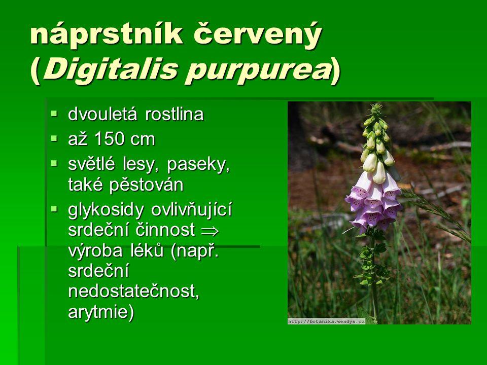 náprstník červený (Digitalis purpurea)  dvouletá rostlina  až 150 cm  světlé lesy, paseky, také pěstován  glykosidy ovlivňující srdeční činnost  výroba léků (např.