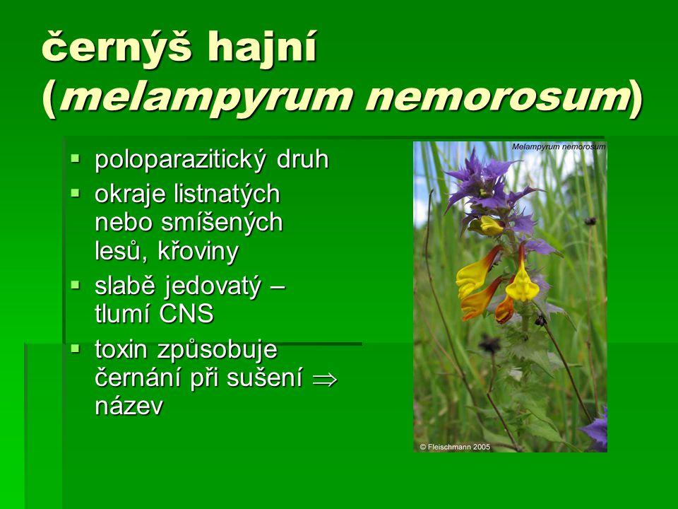černýš hajní (melampyrum nemorosum)  poloparazitický druh  okraje listnatých nebo smíšených lesů, křoviny  slabě jedovatý – tlumí CNS  toxin způsobuje černání při sušení  název