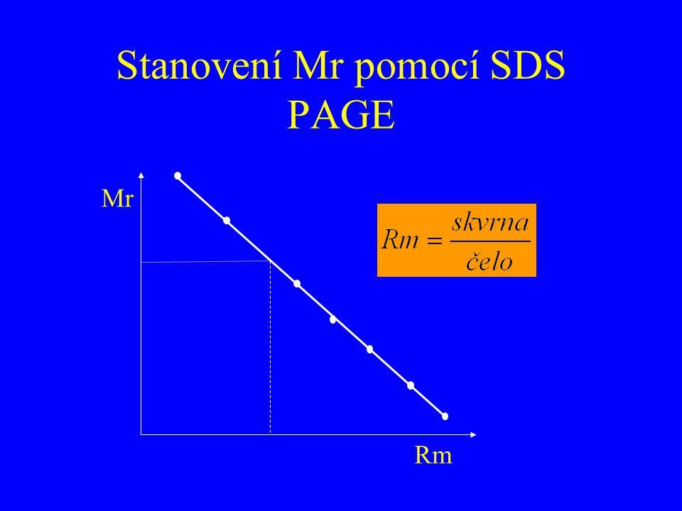 Stanovení Mr pomocí SDS PAGE Mr Rm