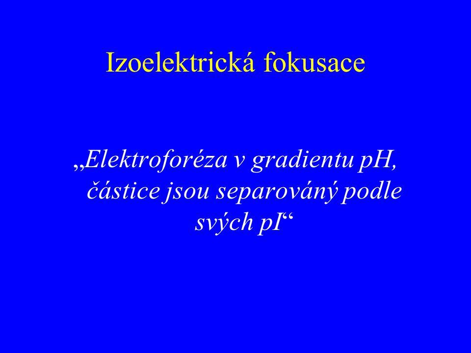 """Izoelektrická fokusace """"Elektroforéza v gradientu pH, částice jsou separováný podle svých pI"""