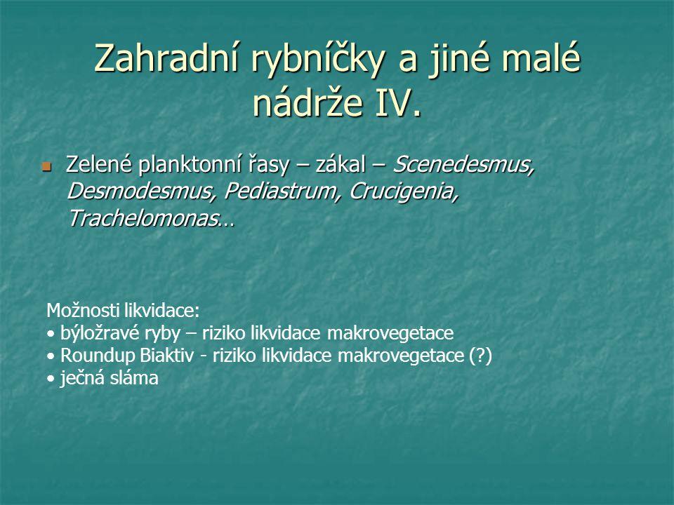 Zahradní rybníčky a jiné malé nádrže IV. Zelené planktonní řasy – zákal – Scenedesmus, Desmodesmus, Pediastrum, Crucigenia, Trachelomonas… Zelené plan