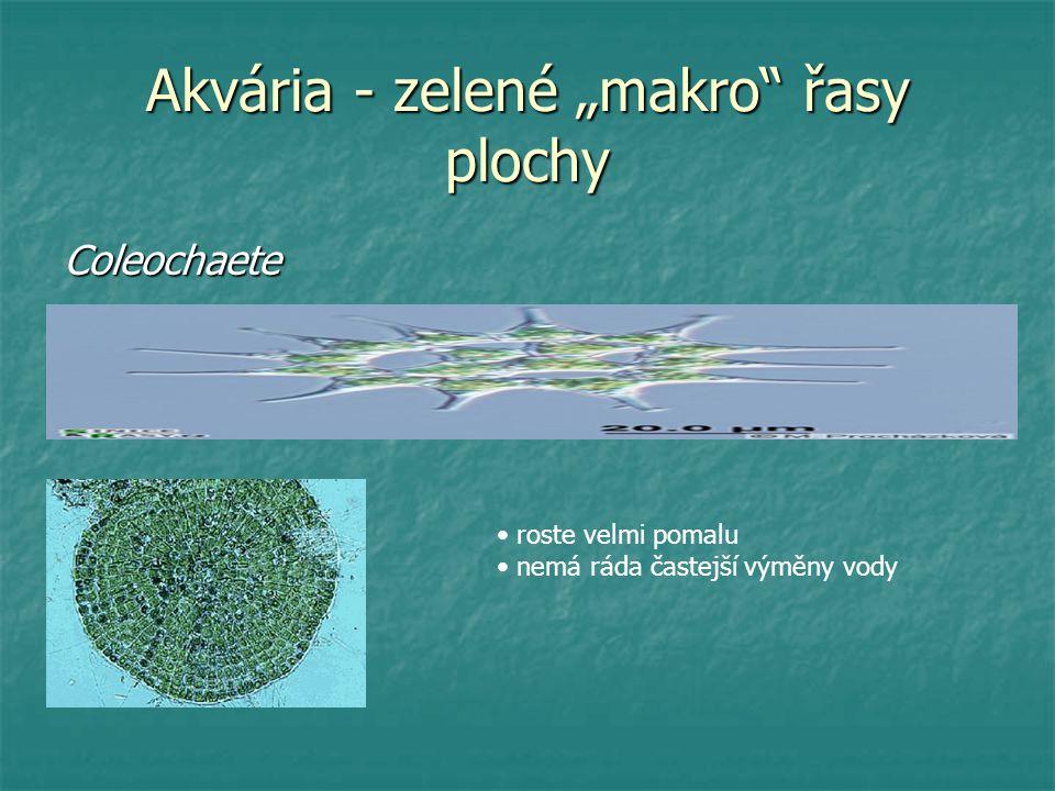 "Akvária - zelené ""makro"" řasy plochy Coleochaete roste velmi pomalu nemá ráda častejší výměny vody"