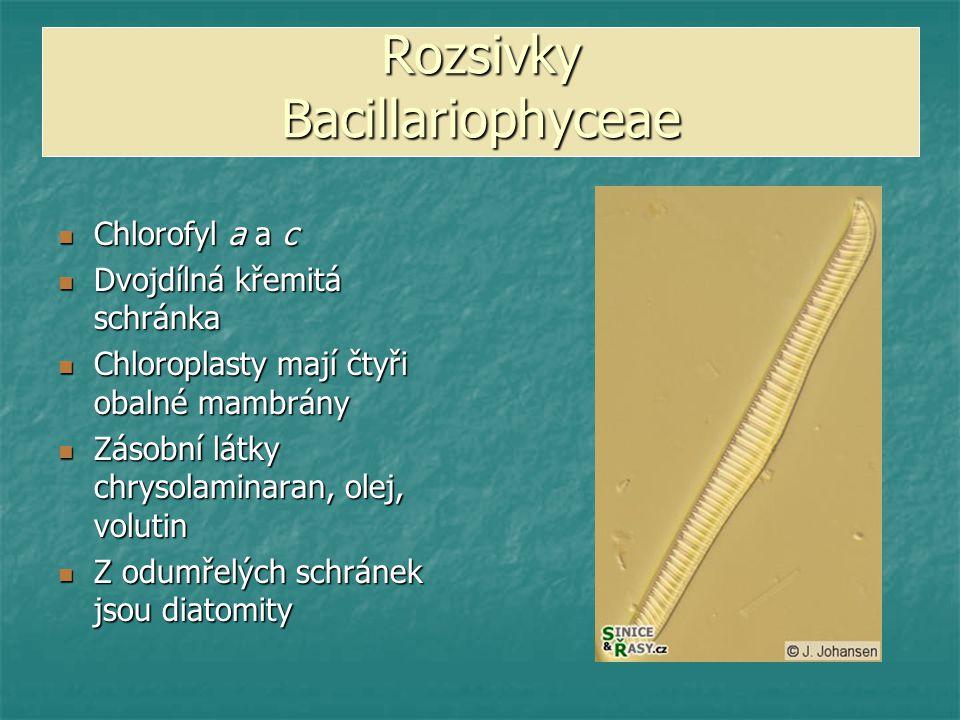Rozsivky Bacillariophyceae Chlorofyl a a c Chlorofyl a a c Dvojdílná křemitá schránka Dvojdílná křemitá schránka Chloroplasty mají čtyři obalné mambrá