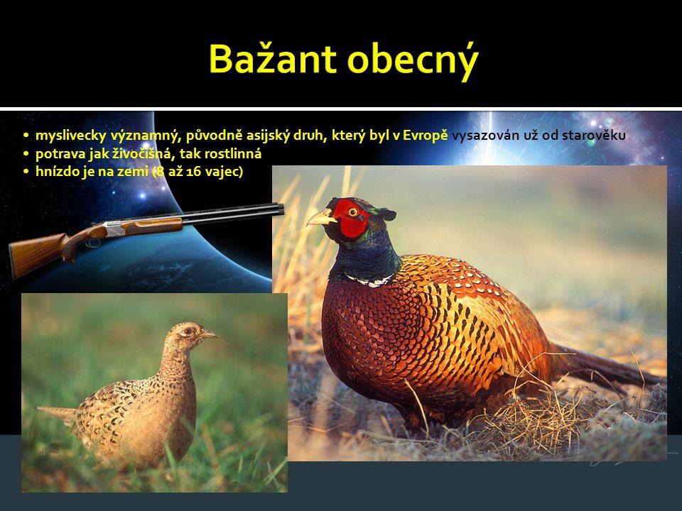 myslivecky významný, původně asijský druh, který byl v Evropě vysazován už od starověku potrava jak živočišná, tak rostlinná hnízdo je na zemi (8 až 1