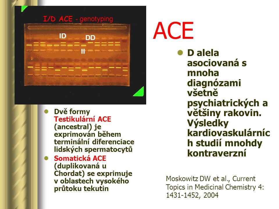 I/D ACE - genotyping ID II DD Dvě formy Testikulární ACE (ancestral) je exprimován během terminální diferenciace lidských spermatocytů Somatická ACE (duplikovaná u Chordat) se exprimuje v oblastech vysokého průtoku tekutin D alela asociovaná s mnoha diagnózami všetně psychiatrických a většiny rakovin.