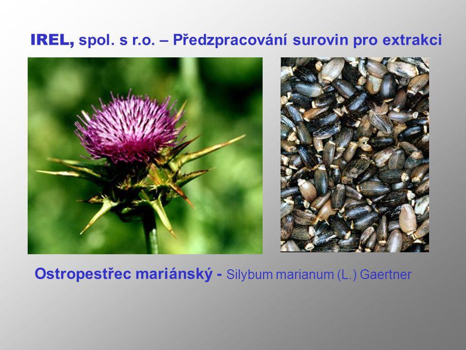 Ostropestřec mariánský - Silybum marianum (L.) Gaertner IREL, spol.