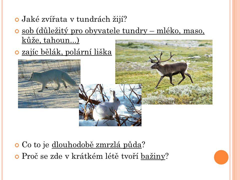 Jaké zvířata v tundrách žijí? sob (důležitý pro obyvatele tundry – mléko, maso, kůže, tahoun...) zajíc bělák, polární liška Co to je dlouhodobě zmrzlá