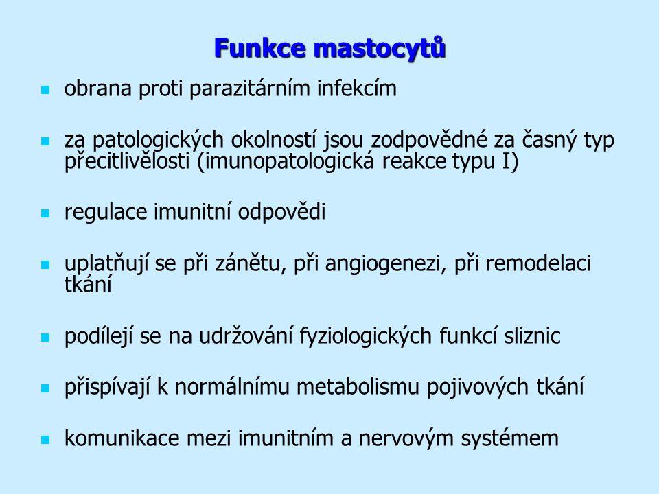 Funkce mastocytů obrana proti parazitárním infekcím za patologických okolností jsou zodpovědné za časný typ přecitlivělosti (imunopatologická reakce typu I) regulace imunitní odpovědi uplatňují se při zánětu, při angiogenezi, při remodelaci tkání podílejí se na udržování fyziologických funkcí sliznic přispívají k normálnímu metabolismu pojivových tkání komunikace mezi imunitním a nervovým systémem