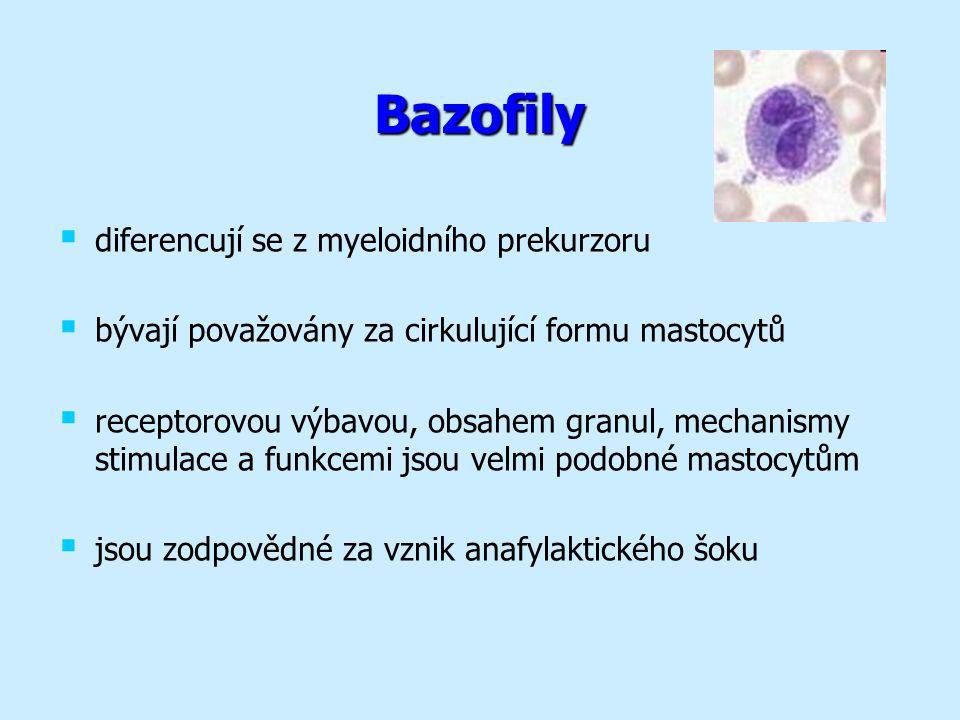 Bazofily   diferencují se z myeloidního prekurzoru   bývají považovány za cirkulující formu mastocytů   receptorovou výbavou, obsahem granul, mechanismy stimulace a funkcemi jsou velmi podobné mastocytům   jsou zodpovědné za vznik anafylaktického šoku