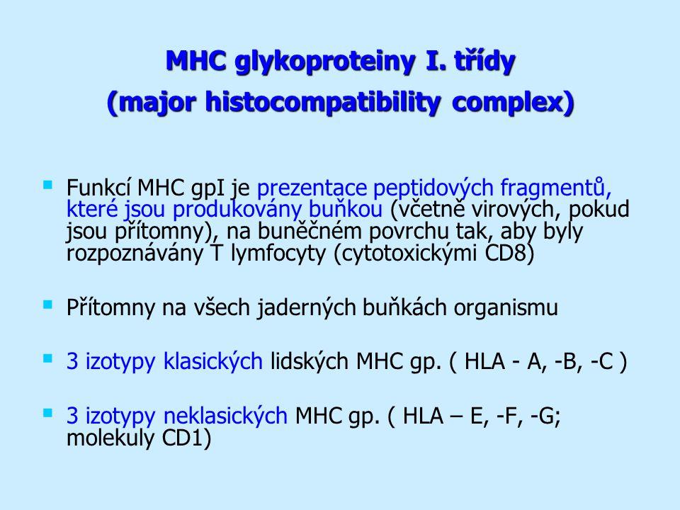 MHC glykoproteiny I.