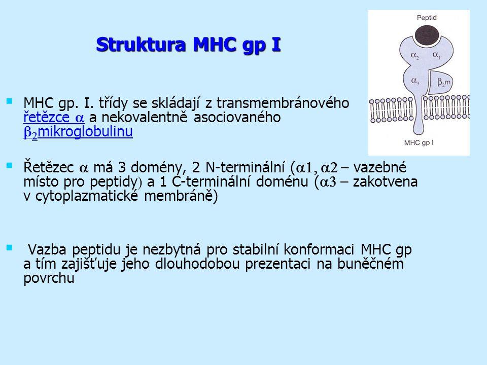 Struktura MHC gp I   MHC gp.I.