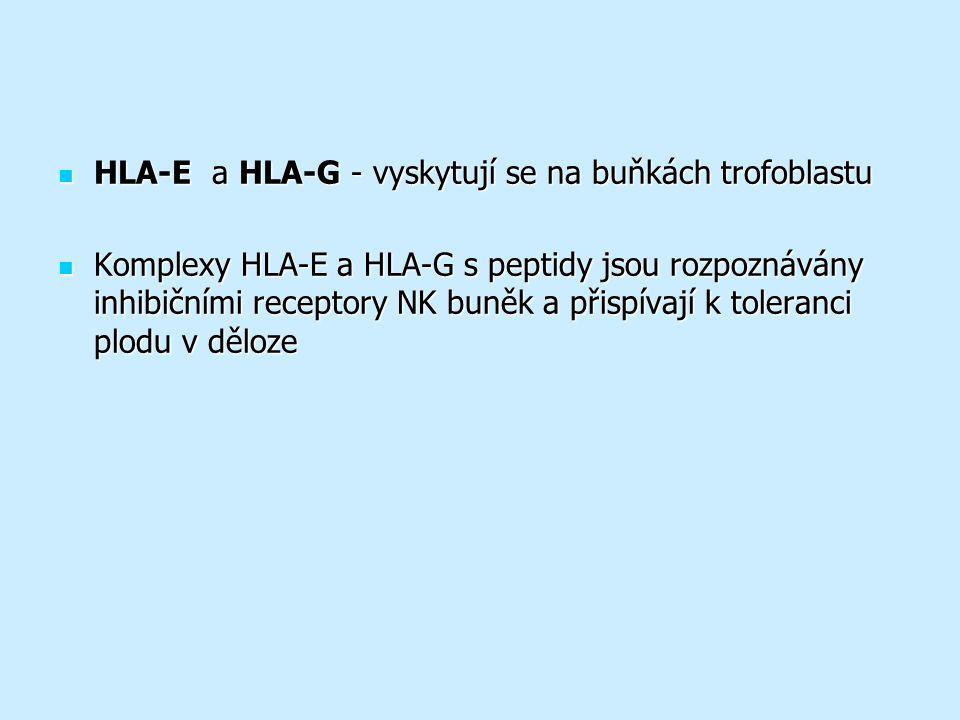 HLA-E a HLA-G - vyskytují se na buňkách trofoblastu HLA-E a HLA-G - vyskytují se na buňkách trofoblastu Komplexy HLA-E a HLA-G s peptidy jsou rozpoznávány inhibičními receptory NK buněk a přispívají k toleranci plodu v děloze Komplexy HLA-E a HLA-G s peptidy jsou rozpoznávány inhibičními receptory NK buněk a přispívají k toleranci plodu v děloze