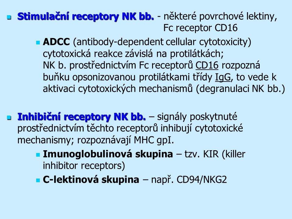 Stimulační receptory NK bb.Stimulační receptory NK bb.