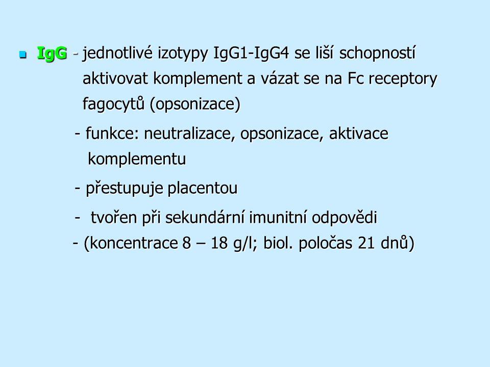 IgG - jednotlivé izotypy IgG1-IgG4 se liší schopností aktivovat komplement a vázat se na Fc receptory fagocytů (opsonizace) IgG - jednotlivé izotypy IgG1-IgG4 se liší schopností aktivovat komplement a vázat se na Fc receptory fagocytů (opsonizace) - funkce: neutralizace, opsonizace, aktivace komplementu - funkce: neutralizace, opsonizace, aktivace komplementu - přestupuje placentou - přestupuje placentou - tvořen při sekundární imunitní odpovědi - (koncentrace 8 – 18 g/l; biol.