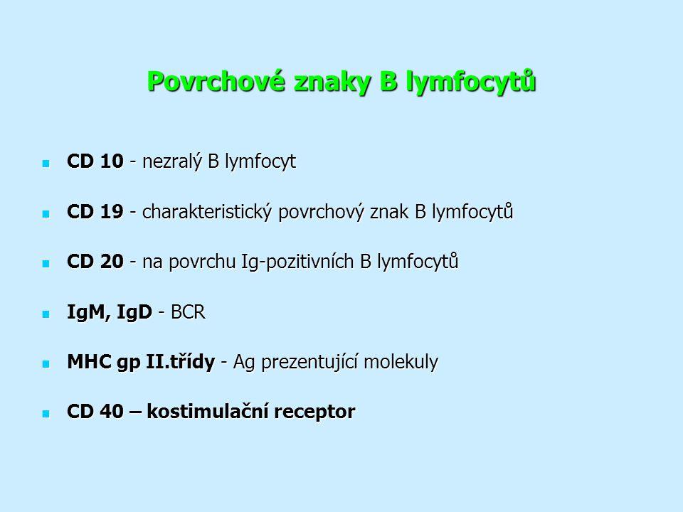 Povrchové znaky B lymfocytů CD 10 - nezralý B lymfocyt CD 10 - nezralý B lymfocyt CD 19 - charakteristický povrchový znak B lymfocytů CD 19 - charakteristický povrchový znak B lymfocytů CD 20 - na povrchu Ig-pozitivních B lymfocytů CD 20 - na povrchu Ig-pozitivních B lymfocytů IgM, IgD - BCR IgM, IgD - BCR MHC gp II.třídy - Ag prezentující molekuly MHC gp II.třídy - Ag prezentující molekuly CD 40 – kostimulační receptor CD 40 – kostimulační receptor