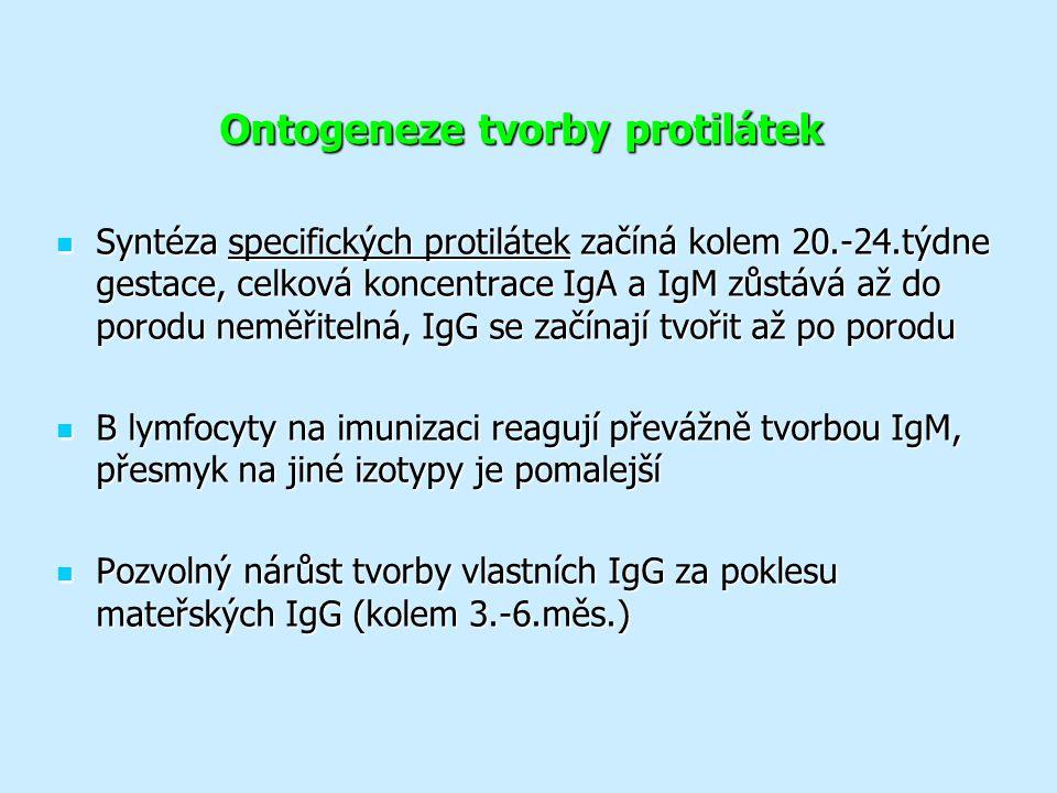 Ontogeneze tvorby protilátek Syntéza specifických protilátek začíná kolem 20.-24.týdne gestace, celková koncentrace IgA a IgM zůstává až do porodu neměřitelná, IgG se začínají tvořit až po porodu Syntéza specifických protilátek začíná kolem 20.-24.týdne gestace, celková koncentrace IgA a IgM zůstává až do porodu neměřitelná, IgG se začínají tvořit až po porodu B lymfocyty na imunizaci reagují převážně tvorbou IgM, přesmyk na jiné izotypy je pomalejší B lymfocyty na imunizaci reagují převážně tvorbou IgM, přesmyk na jiné izotypy je pomalejší Pozvolný nárůst tvorby vlastních IgG za poklesu mateřských IgG (kolem 3.-6.měs.) Pozvolný nárůst tvorby vlastních IgG za poklesu mateřských IgG (kolem 3.-6.měs.)