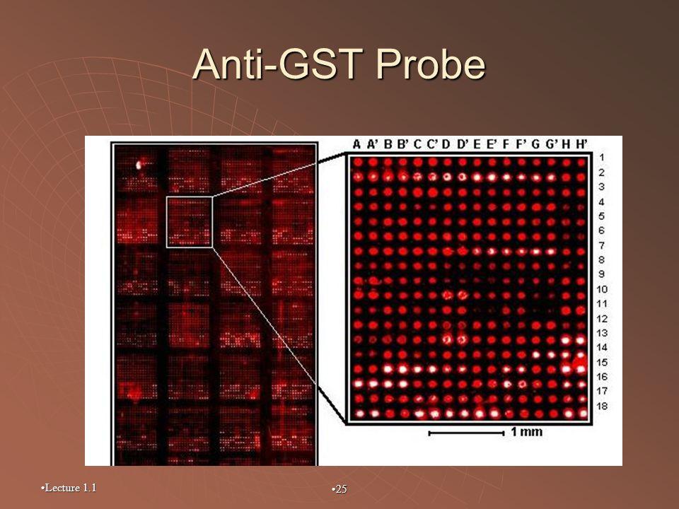 Lecture 1.1 25 Anti-GST Probe