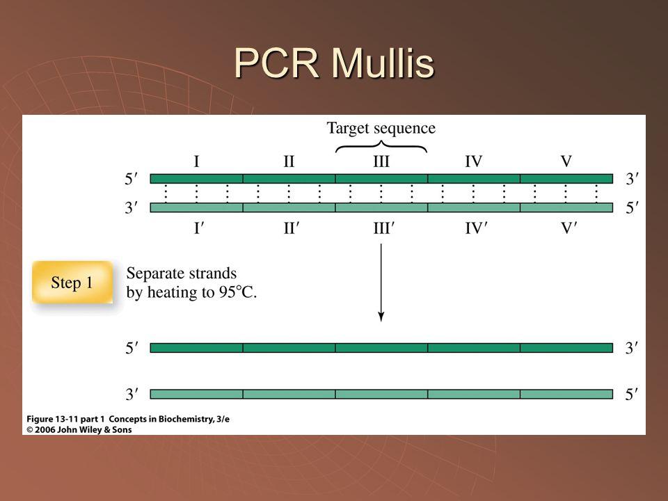 PCR Mullis