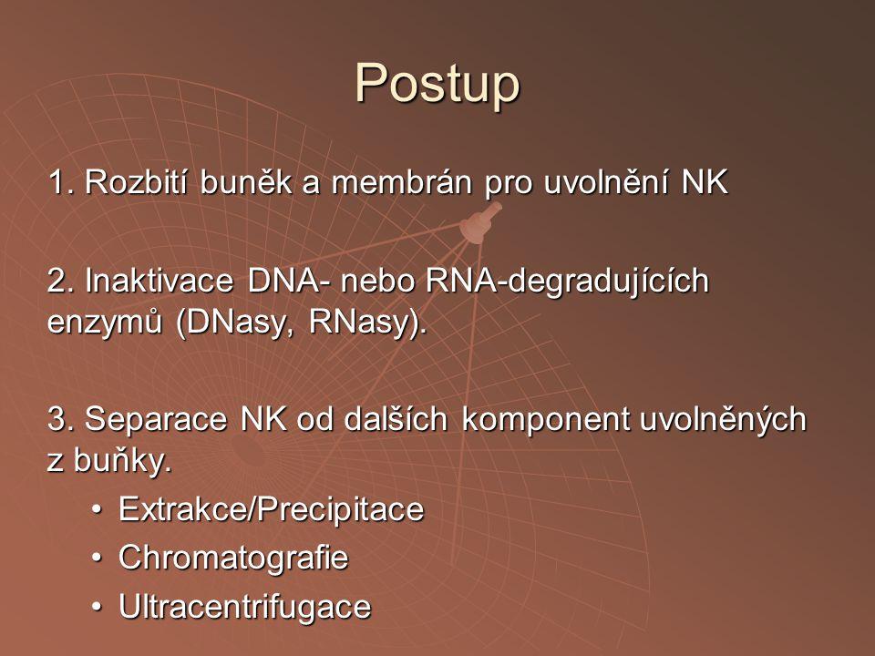 Postup 1.Rozbití buněk a membrán pro uvolnění NK 2.