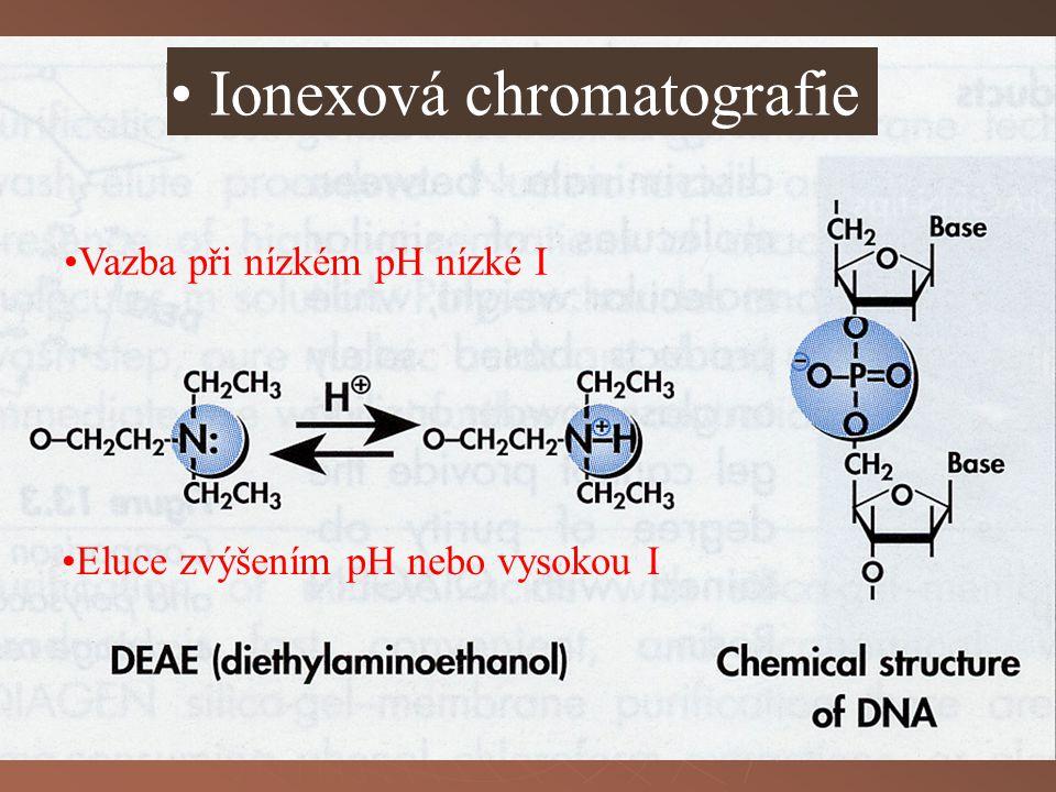 Eluce zvýšením pH nebo vysokou I Ionexová chromatografie Vazba při nízkém pH nízké I