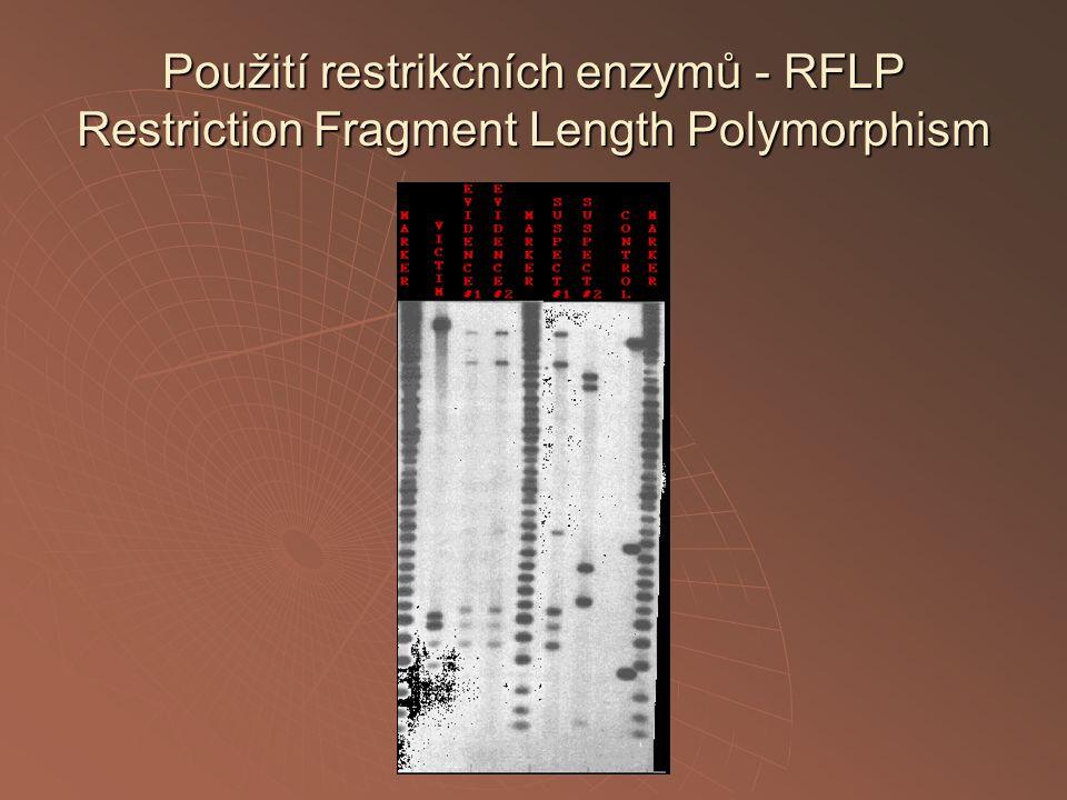 Použití restrikčních enzymů - RFLP Restriction Fragment Length Polymorphism