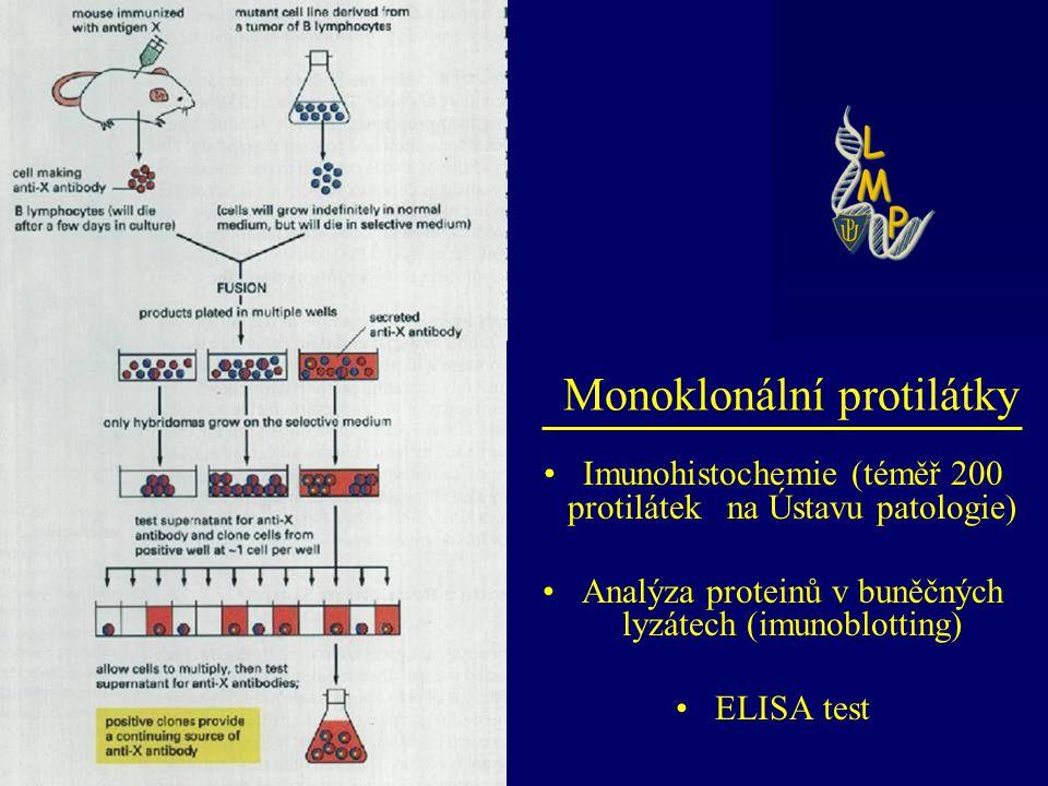 Imunohistochemie (téměř 200 protilátek na Ústavu patologie) Analýza proteinů v buněčných lyzátech (imunoblotting) ELISA test Monoklonální protilátky