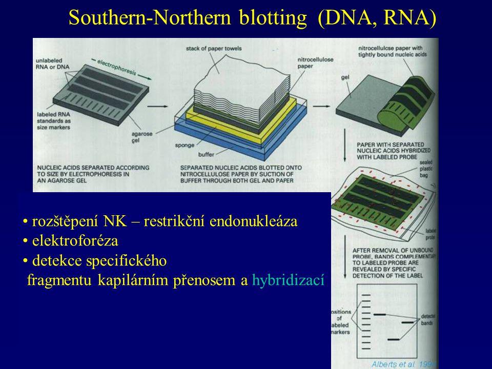 Southern-Northern blotting (DNA, RNA) rozštěpení NK – restrikční endonukleáza elektroforéza detekce specifického fragmentu kapilárním přenosem a hybri