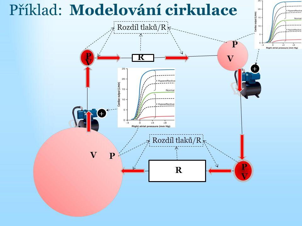 + + P P P P R R V V V V Rozdíl tlaků/R Příklad: Modelování cirkulace