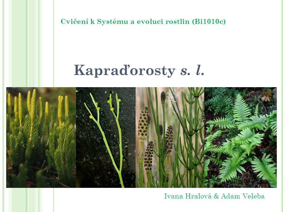 Kapraďorosty s. l. Cvičení k Systému a evoluci rostlin (Bi1010c) Ivana Hralová & Adam Veleba